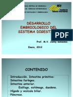 DESARROLLO EMBRIOLOGICO DIGESTIVO