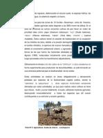 Diagnóstico de Plantas Medicinales 2.2