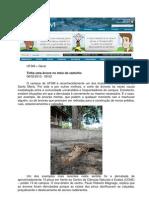 Projeto Paisagístico na UFSM - Por Natalia Teixeira Schwab
