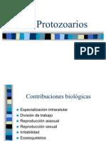 PPT Protozoarios