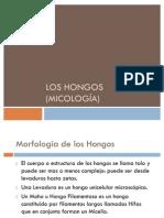 Los hongos (micología) completo2