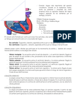 Aparato Circulatorio Venas y Arterias