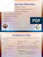 Dopamina Beta Hidroxilasa PPT (EC 1.14.17.1)
