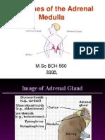Hormones of the Adrenal Medulla for Labcon