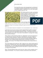 Yatesbury Spiral crop circle – decoding and interpretation
