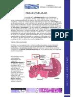 3 Nucleo y Division Celular