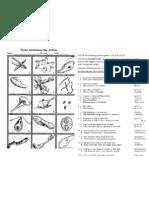 ACTIVITY Protist Dichotomous Key Activity