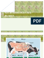 Microbiologia Del Rumen Clase2