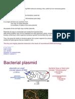 plasmids(2)
