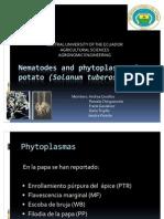 Nematodes and Phytoplasmas on Potato