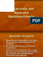 Desarrollo del Aparato Genitourinario