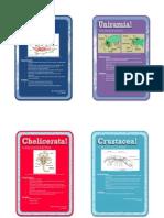 Biololgy 1 - Invertebrates (Dahlia)