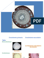Biología Vegetal- Anatomía del Tallo y la Raíz
