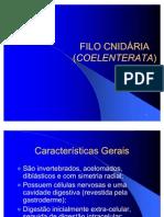 02 filo cnidaria