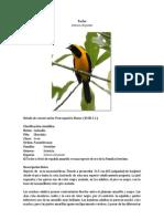 Aves Visualizadas en La Finca Santa Lucia Durante La Salida de Campo