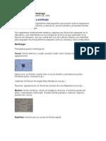 Introducción a la Bacteriología