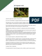 Características de la iguana verde