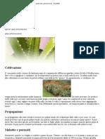 Piante Aloe Arborescensis - GiardiWiki