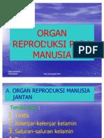 Organ Reproduksi Pada Manusia