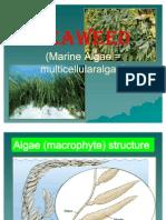 Presentation Mar 410 Seaweed
