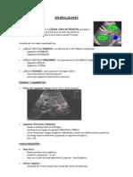 SEGMENTOS HEPATICOS (ECOGRAFIA) 1