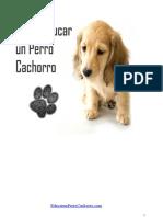7 Claves para Educar un Perro Cachorro