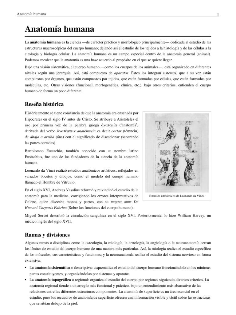 Excelente Anatomía: Significado Ilustración - Imágenes de Anatomía ...