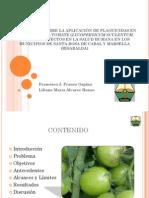 Diagnostico Plaguicidas Tomate 2008 - Francisco J. Franco Ospina