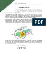 Desarrollo Embriológico de Cabeza y Cuello