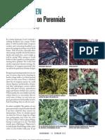 WinterGreen-The Lowdown on Perennials