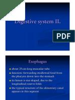Digestive System 2 histology