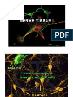 Nerve Tissue 1 histology