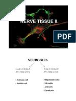 Nerve Tissue 2 histology
