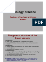 Sections of the Heart and Blood Vessels histology