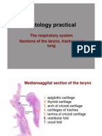 The Respiratory System histology