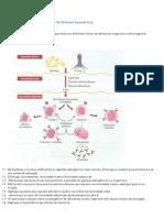 Ficha_de_trabalho_-_Sistema_imunitário_(3)_Resolução