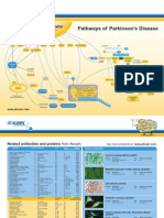 Park in Sons Signaling Pathway