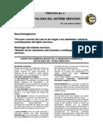 Práctica histología del S.N. Feb 2012.