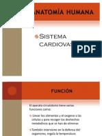 Sistema Cardiovascular OK