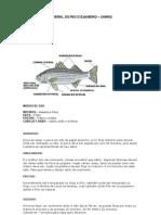 Apostila de Peixes Exata 1