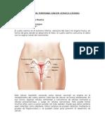 Deteccion Temprana Cancer Cervico Uterino
