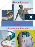 Sistema Neuro - Hormonal - II