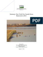 New York City Canada Goose Management Report 2011