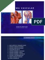 Anatomia Vascular Cerebral. Wilson