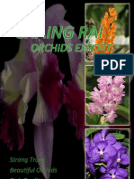 Chiang Rai Orchids Export Group 26 Sec. 2