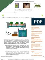 Explicación del sistema de raíz flotante en tubos de PVC (Una clase de cultivo hidroponico sin tierra