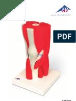 Knee Model 3b