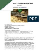 Tiliqua scincoides - fiche élevage