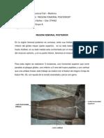 Diseccion Region Femoral Posterior- Karen Lopez