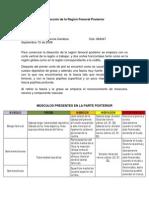 Diseccion Region Femoral Posterior-Christian Balbino
